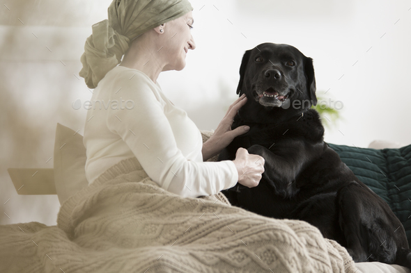 Dog giving paw sick woman - Stock Photo - Images