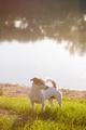 Calm dog enjoying sunny day on lake