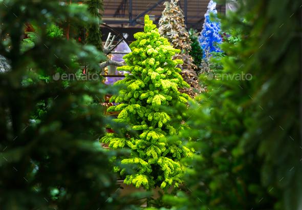 Xmas trees, christmas decoration shop, new year - Stock Photo - Images