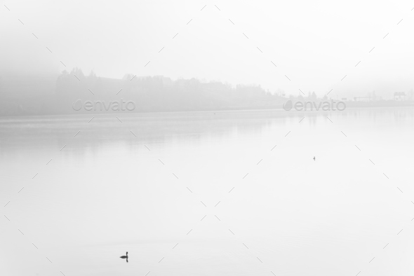Lonely duck over calm lake in fog,fine art B&W - Stock Photo - Images