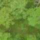 Aerial Green Forest. - VideoHive Item for Sale