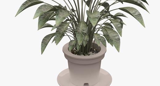 Plant - Tree