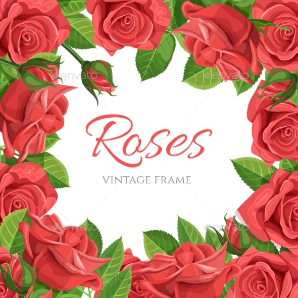GraphicRiver Red Rose Vector Illustration Frame 20881452