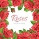 Red Rose Vector Illustration Frame