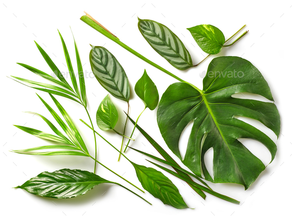 various tropical leaves - Stock Photo - Images