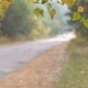 Cars Drive Through the Forest Road. - VideoHive Item for Sale
