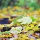 Leaves Trees Autumn Forest - VideoHive Item for Sale
