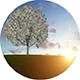 Money Tree Landscape - VideoHive Item for Sale