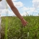 Girl in a Dress in a Field of Grass - VideoHive Item for Sale