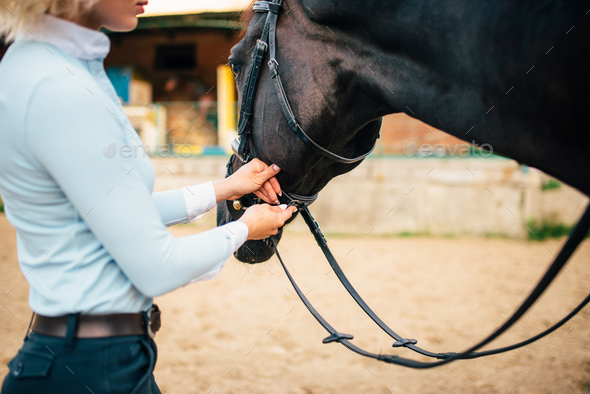 Female rider keeps the horse for a reason - Stock Photo - Images