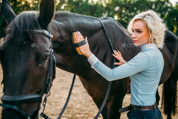 Woman take caring for the hair of brown horse - Stock Photo - Images