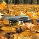 Drone Takoff From Leaves Carpet in Autumn Forest.