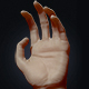 Sculpted Human Hand - 3DOcean Item for Sale