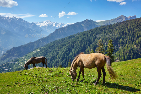 Horses in mountains. Himachal Pradesh, India - Stock Photo - Images