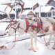 Reindeers in a winter landscape - PhotoDune Item for Sale
