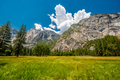 Meadow in Yosemite National Park Valley