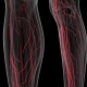 Human Body with Glow Blood Vessels - VideoHive Item for Sale