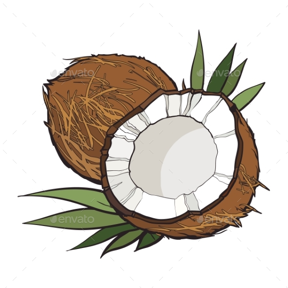 GraphicRiver Coconut Isolated on White Background 20904831