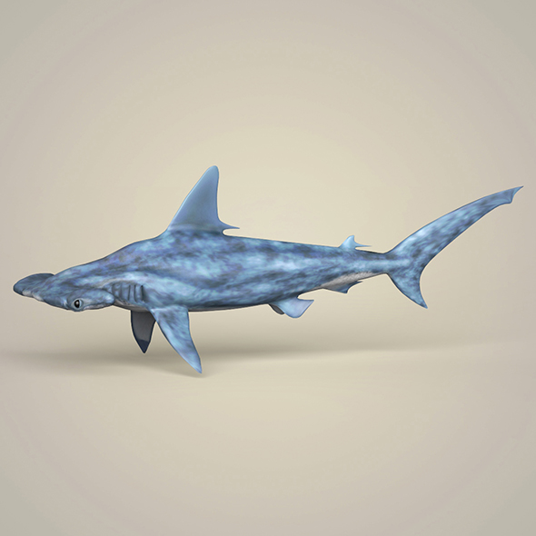 Realistic Hammerhead Shark - 3DOcean Item for Sale