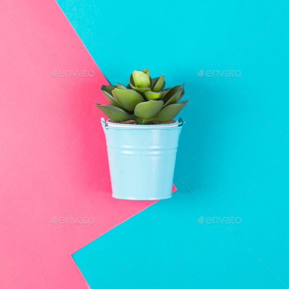 Artificial plant on a blue pink background. Minimal - Stock Photo - Images
