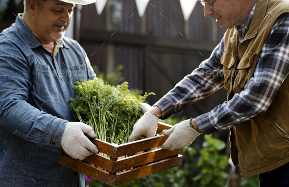 Gardener gives organic fresh agricultural product to customer - Stock Photo - Images