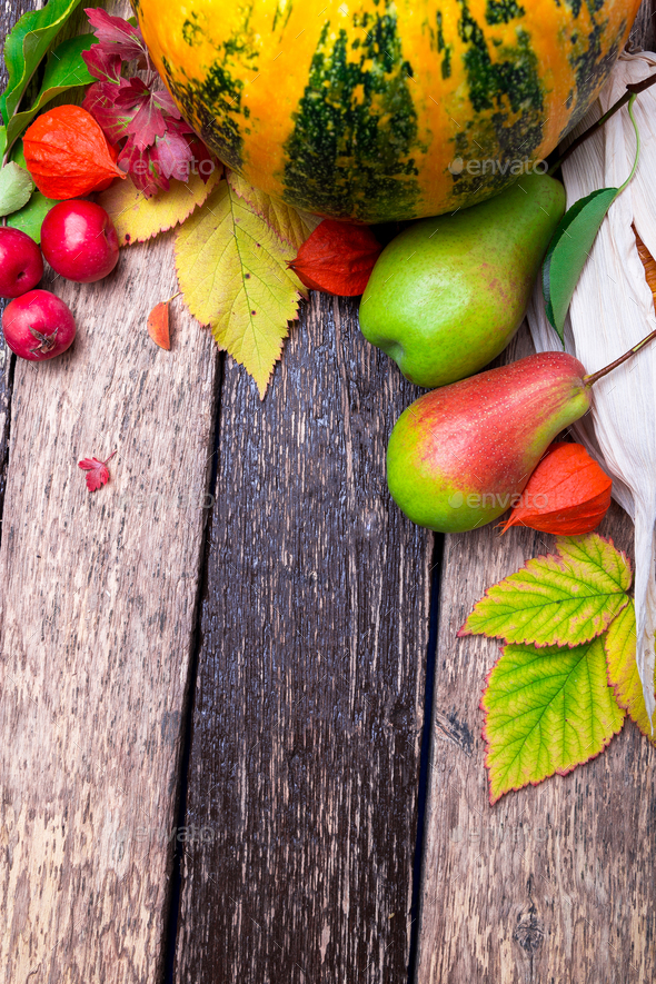 Thanksgiving background with autumn fruits - Stock Photo - Images