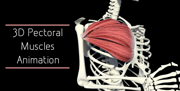3D Pectoral Muscles Animation by madi7779 | VideoHive