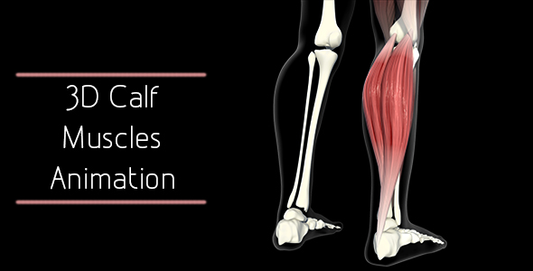 3d Calf Muscles Animation By Madi7779 Videohive