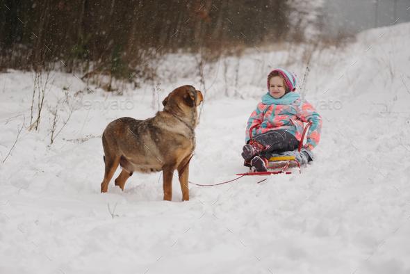 dog rolls little girl on sled - Stock Photo - Images