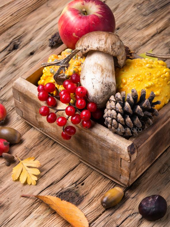 Autumn still life with pumpkin, apple, mushrooms - Stock Photo - Images