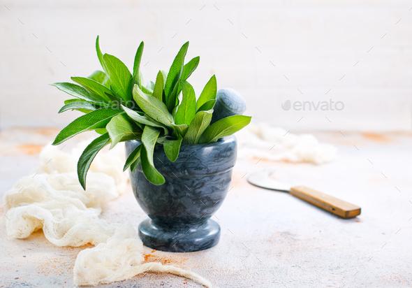 fresh sage - Stock Photo - Images