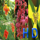 Flower Pack 03 Full HD - VideoHive Item for Sale