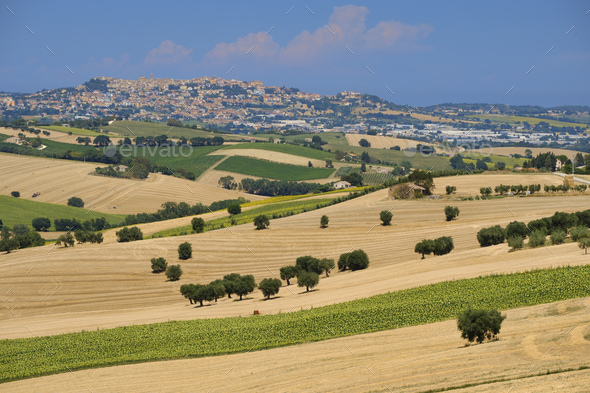 Summer landscape in Marches (Italy) near Montefano - Stock Photo - Images