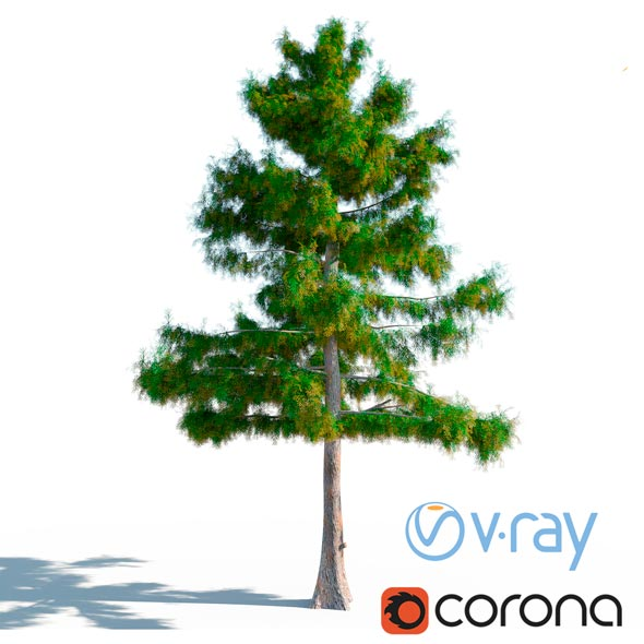 3DOcean Cedar Tree No 2 20917507