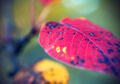 Bright autumn leaf - PhotoDune Item for Sale