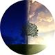 Money Tree Sunrise - VideoHive Item for Sale
