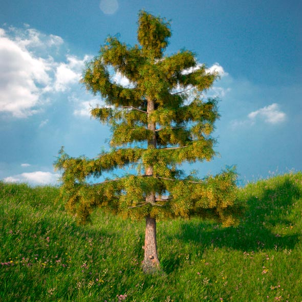 Cedar Tree No 2 - 3DOcean Item for Sale