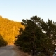 Scenery of Lake Baikal Shore. Сountry Road, Trees, Mountain, Sunset. - VideoHive Item for Sale