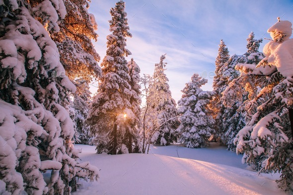 Trees covered with hoarfrost and snow in winter mountains - Stock Photo - Images