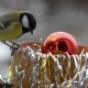 Birds in Christmas - VideoHive Item for Sale