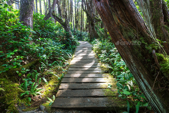 Vancouver forest - Stock Photo - Images