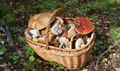 Basket with edible mushrooms - PhotoDune Item for Sale