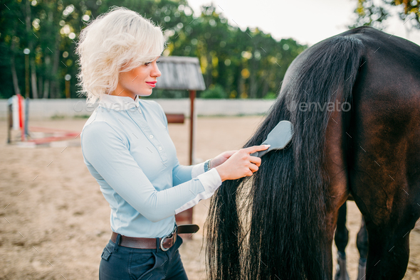 Young woman combing the tail of the horse - Stock Photo - Images
