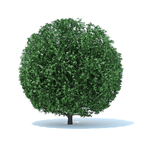Spherical Shrub - 3DOcean Item for Sale