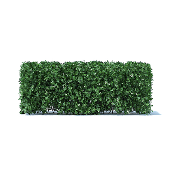Straight Hedge - 3DOcean Item for Sale