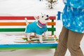 Dog Jack Russell Terrier in winter park - PhotoDune Item for Sale