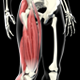3D Quadriceps Muscles - VideoHive Item for Sale