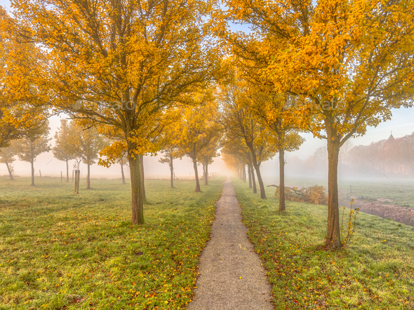 Group of trees with yellow autumn leaves - Stock Photo - Images