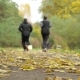 People Run in Autumn Park Forest - VideoHive Item for Sale