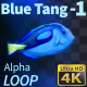 Blue Tang 1 - VideoHive Item for Sale
